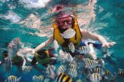 best snorkeling in bali with lots of fish