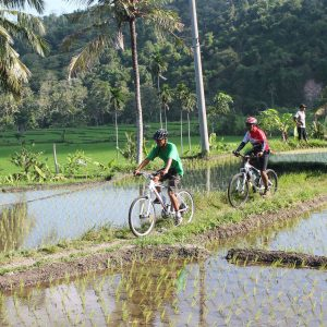 bali cycling tours. Ride through the Bali rice paddies