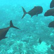 best snorkeling tour in lembongan