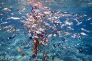 come enjoy snorkeling in bali in lembongan