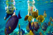 best snorkeling tours in bali in lemboongan