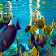 best snorkeling tours in bali in lemboongan