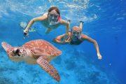 see turtles in snorkeling lembongan