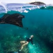 dive with manta rays in nusa penida