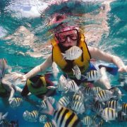 snorkeling in nusa dua with so many fish to see