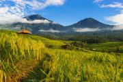 the ultimate tour of Jatiluwih rice terraces bali