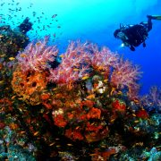 fun dive in sanur to trial diving in bali