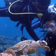 see turtles on the sanur fun dive
