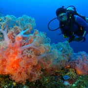 bali leading dive tour agent for scunba diving in bali