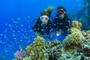 fun dive in bali in Sanur
