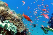 many fish on bali's best fun dive in sanur