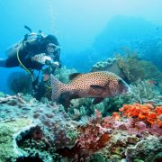 see more underwater with the Scuba Diving Bali - PADI Rescue Diver Course