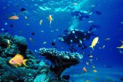 amazing fish and coral on the Scuba Diving Bali - PADI Rescue Diver Course