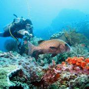 scuba diving in bali at padangbai
