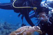 see turtles on your bali scuba dive in padangbai