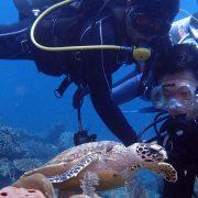 see turtles on your bali scuba dive in padangbai