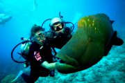 huge fish on your bali scuba diving adventure