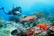 come dive with us Scuba Diving Bali - Scuba Diving advanced Certification
