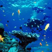 so many fish on the Scuba Diving Bali - Scuba Diving advanced Certification