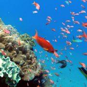 the best Scuba Diving Bali - Scuba Diving advanced Certification 9