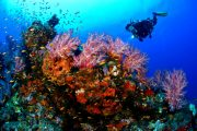 see bali's underwater world in padangbai