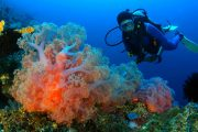 best fun scuba dive in bali at padang bai