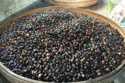 bali lawak coffee plantation tour