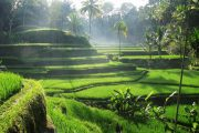 explore Bali's finest locations and see tegalalang rice terrace