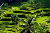 Tegalalang Rice Paddy Tour