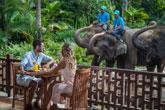 Breakfast With Elephant Tour