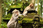 Ubud Monkey Forest Tour