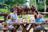 Breakfast With Orangutans Tour